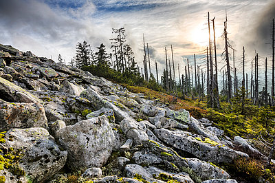 Germany, Bavaria, Lusen, Bavarian Forest National Park, Forest dieback in autumn - p300m981224f by Stefan Schurr