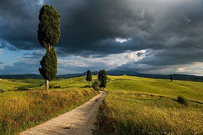 Landschaft bei Pienza, Val d`Orcia, Provinz Siena, Toskana, Italien, UNESCO Welterbe - p1316m1161060 von Daniel Schoenen