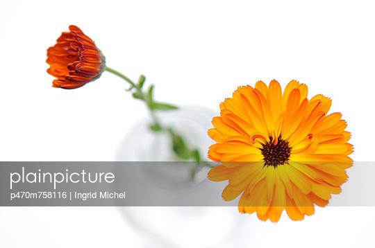 Ringelblume - p470m758116 von Ingrid Michel