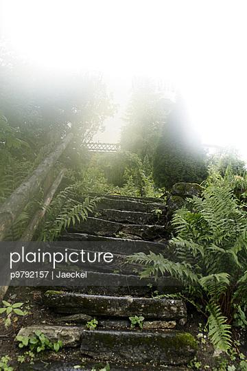 ueberwucherte Treppe in nebliger Stimmung - p9792157 von Jaeckel