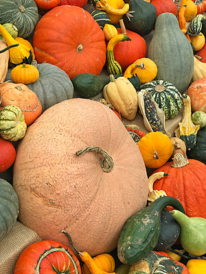 A pile of pumpkins - p1048m2016837 by Mark Wagner