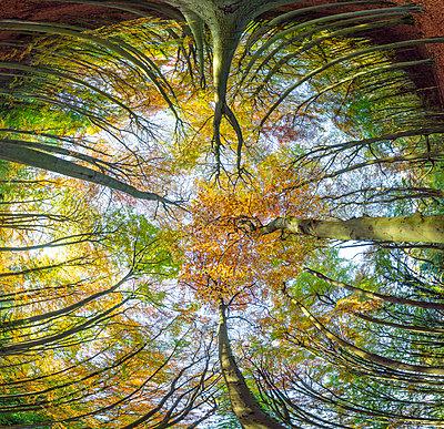 Cheltenham, Herbst - p1057m1072071 von Stephen Shepherd
