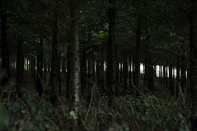 Dark Forest - p6640076 by Yom Lam