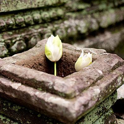 Angkor Wat - p940m851847 by Bénédite Topuz