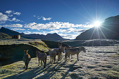Andes - p1259m1072307 by J.-P. Westermann