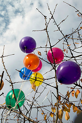 Balloons hanging in a tree - p451m953146 by Anja Weber-Decker