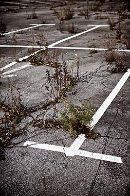 Unkraut wuchert im Asphalt eines Parkplatzes - p586m972964 von Kniel Synnatzschke