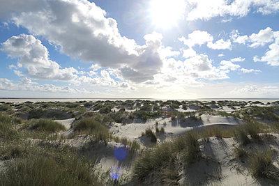Amrum, dune scenery - p237m2027517 by Thordis Rüggeberg