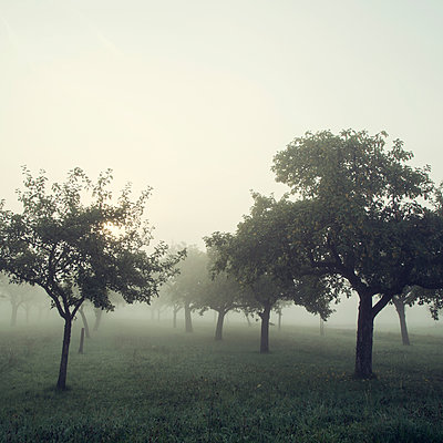 Fog - p992m946227 by Carmen Spitznagel