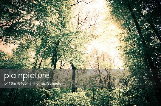 Waldlichtung im Frühling - p416m784654 von Thomas Schaefer