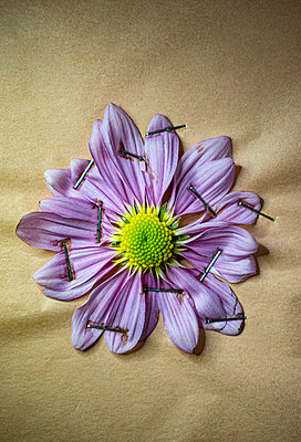 Pinned flower - p971m2278903 by Reilika Landen