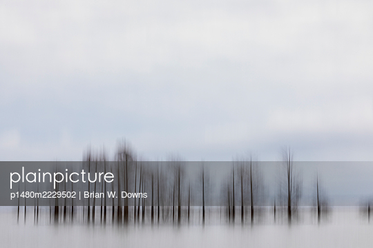 Vertical motion blur of a cypress trees - p1480m2229502 by Brian W. Downs
