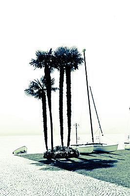 Palmen am Lago Maggiore - p979m1513299 von Martin Kosa