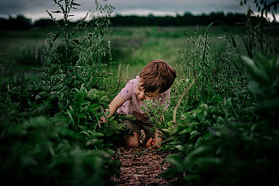 Boy picking plants while kneeling on field - p1166m1568775 by Cavan Images