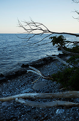 Branches on beach - p312m971034f by Lena Koller