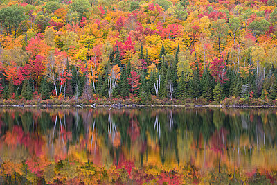 Forest along lake in autumn, Laurentian Mountains, La Mauricie National Park, Quebec, Canada - p884m1356777 by Matthias Breiter