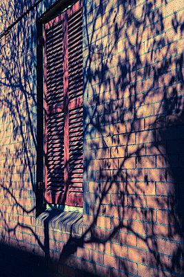 Tree casting shadow on brick house  - p1170m1044343 by Bjanka Kadic