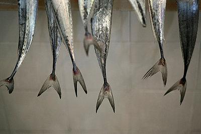 Fishtails - p3017135f by Marc Volk