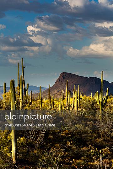 Saguaro National Park, Arizona - p1460m1540745 by Ian Shive
