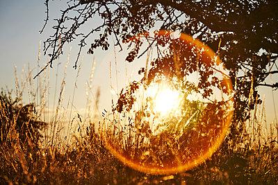 Morgendämmerung - p1272m1162709 von Steffen Scheyhing