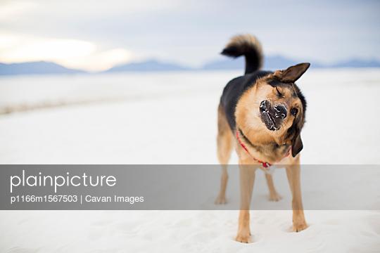 p1166m1567503 von Cavan Images