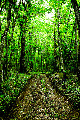 Green forest - p248m908376 by BY