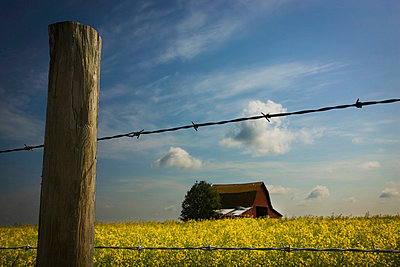 View Of An Old Barn Through A Barbed Wire Fence - p44211538f by Darren Greenwood