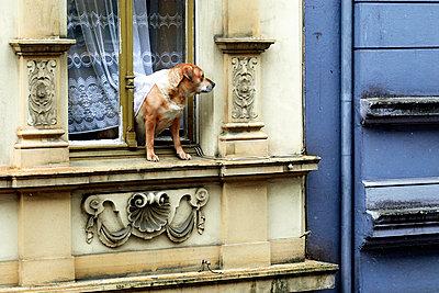 Hund im Fenster - p1164m951948 von Uwe Schinkel