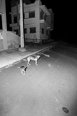 Stray dogs - p1177m1467457 by Philip Frowein