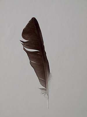 Pinfeather - p444m1041374 by Müggenburg