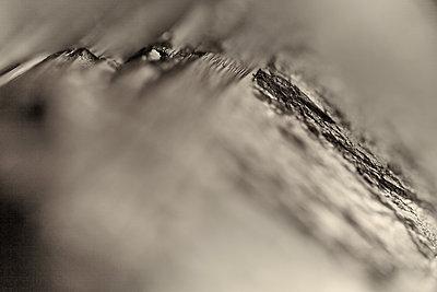 Tourmaline - p534m2122000 by Susanna Ferran Vila