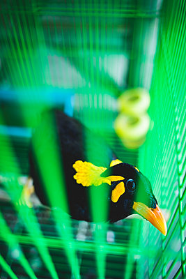 Bird in bird cage - p680m1511523 by Stella Mai