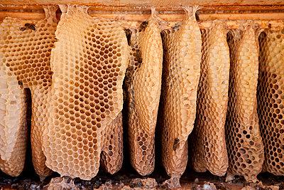 Bienenwaben - p781m1000182 von Angela Franke