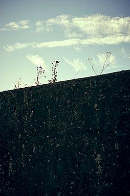 Mauer mit Gestrüpp - p900m1172471 von Michael Moser