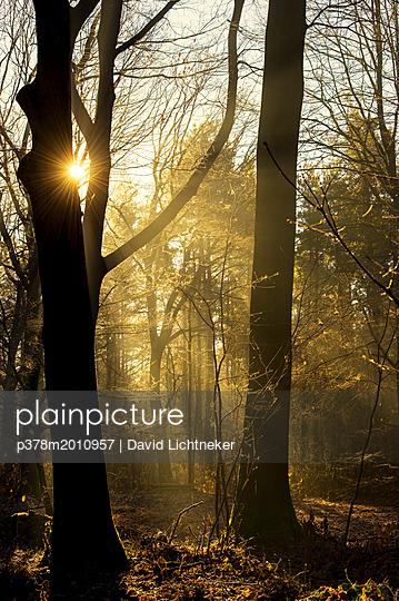 p378m2010957 von David Lichtneker