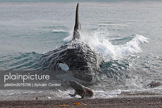 p840m2075735 von Sylvain Cordier
