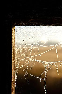 Spinnennetz mit Raureif - p533m1120329 von Böhm Monika