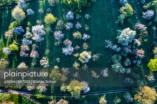 Germany, Baden-Wuerttemberg, Rems Valley, Aerial view of meadow with scattered fruit trees in spring - p300m1587003 von Stefan Schurr