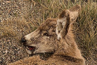 Dead deer - p1291m1548068 by Marcus Bastel