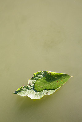 Green leaf floating on cloudy water - p1682m2270271 by Régine Heintz