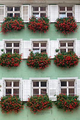 Balcony plant - p2230355 by Thomas Callsen