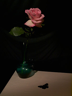 Rose and butterfly - p444m924669 by Müggenburg