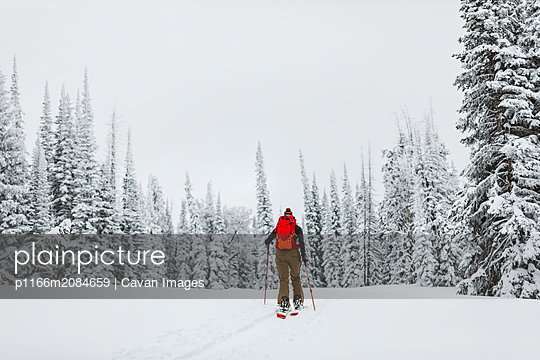 Solo female skier skins off into the trees during a snowy winter day - p1166m2084659 by Cavan Images