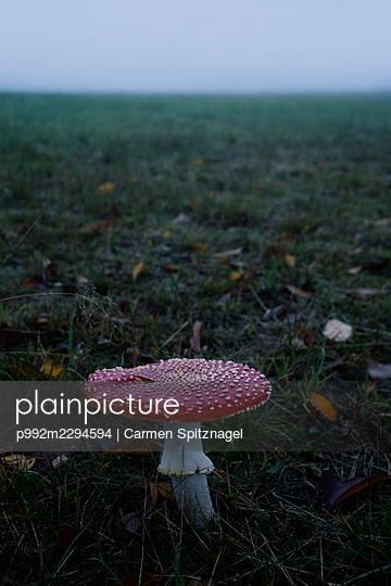 Fliegenpilz - p992m2294594 von Carmen Spitznagel