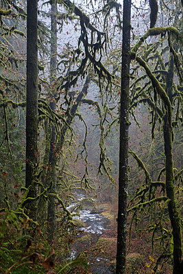 Mist in Silver Creek Falls State Park - p1262m1191171 by Maryanne Gobble