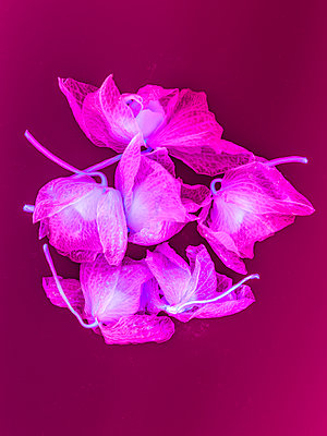 Orchid blossoms - p401m2128635 by Frank Baquet