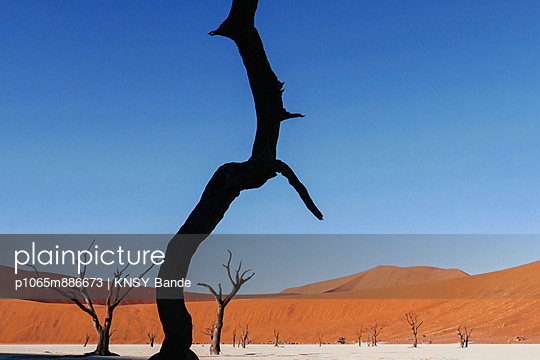 Dead tree - p1065m886673 by KNSY Bande