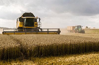 Getreideernte - p1057m1440422 von Stephen Shepherd