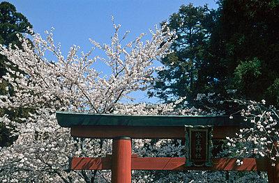 Nara in Japan  - p6360031 von François-Xavier Prévot