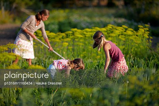 Mutter und Töchter in einem Gemüsegarten, Niedersachsen, Deutschland - p1316m1160434 von Hauke Dressler
